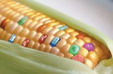 10 facts about GMO's in SouthAfrica