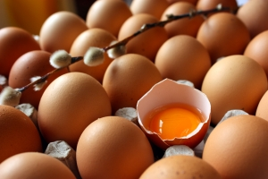 what's in a free range egg?