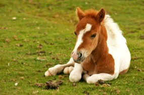 Cute-Horse-Wallpapers